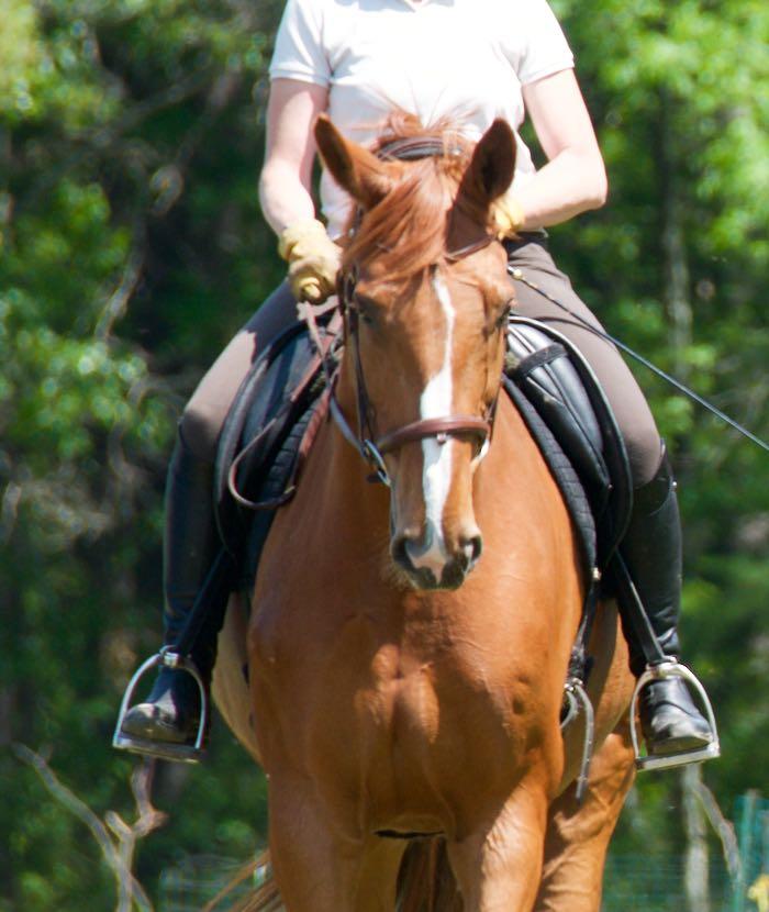one ear on rider
