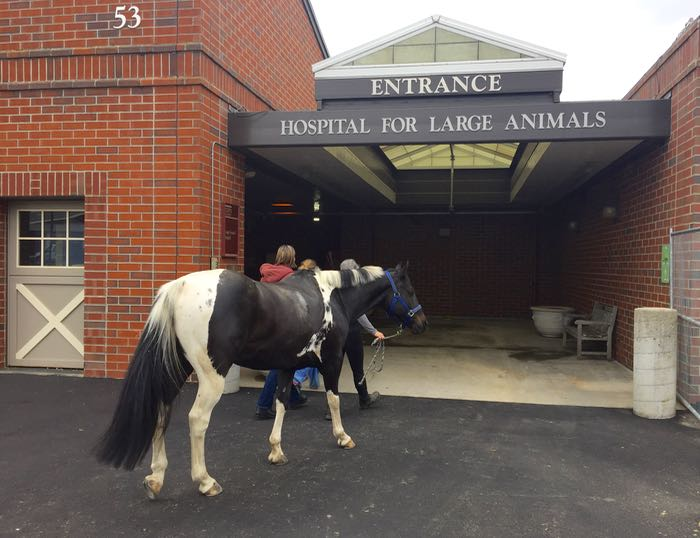 Tonka's Prognosis – The Cooperative Horse